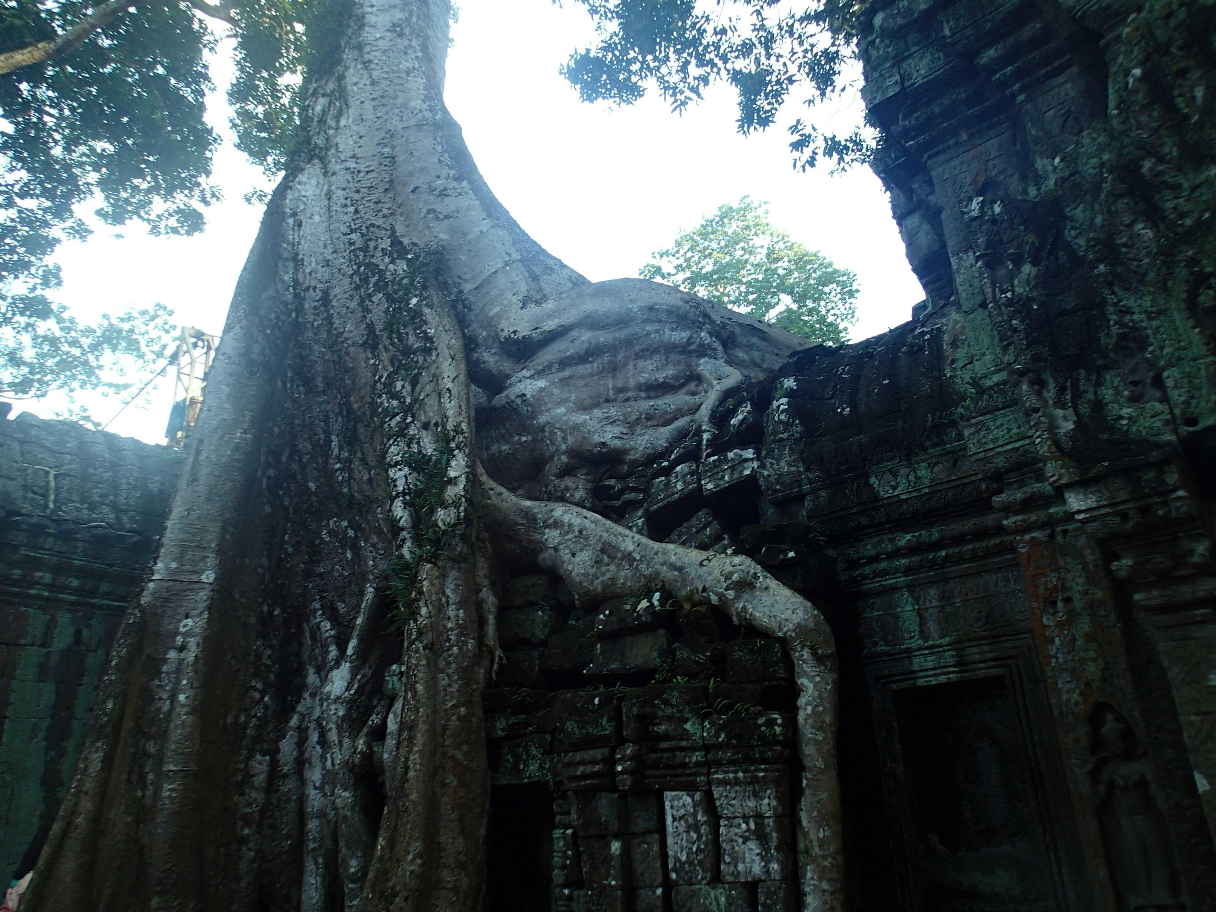 tree-temple3