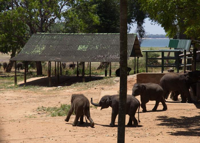 day10--elephant-orphanage