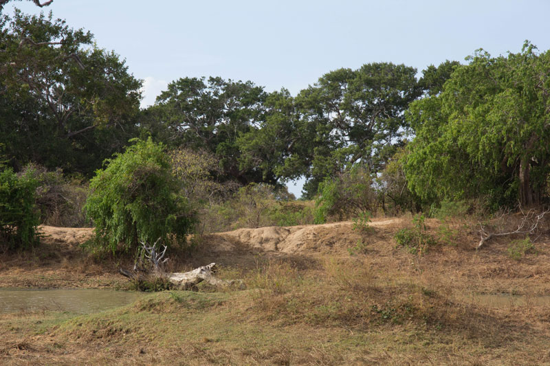 day11---a-Yala-National-Park19