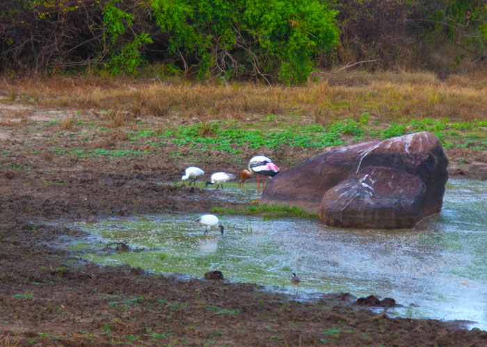 day11---a-Yala-National-Park3