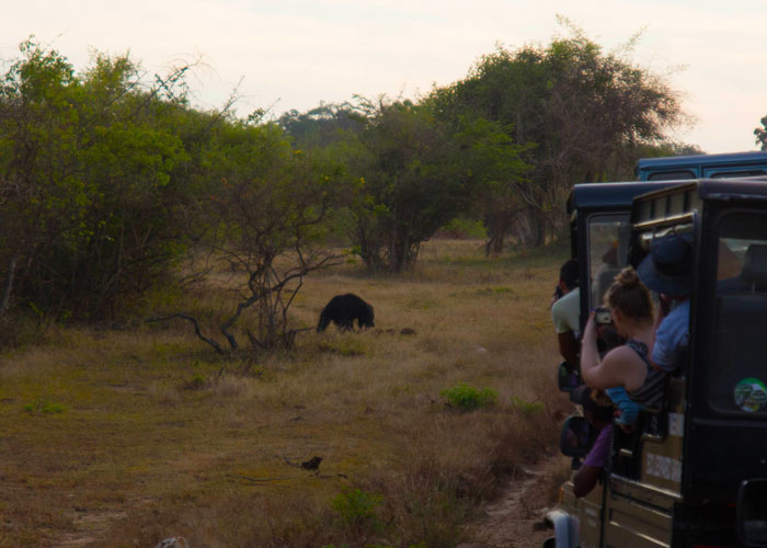 day11---a-Yala-National-Park6